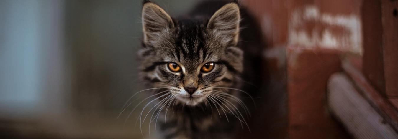Dobrá velká černá kočička