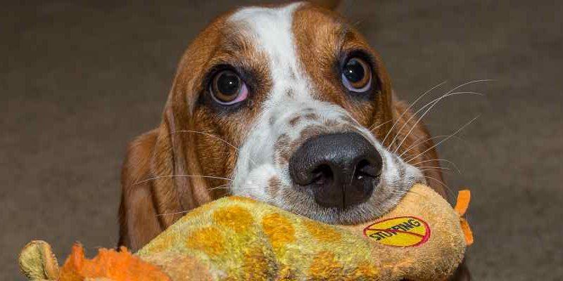 Jak vybrat nejlepší hračky pro psy