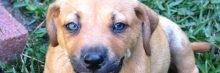 Jak vybrat vitamíny a doplňky stravy pro psy