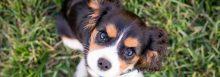 Jak vybrat antiparazitika a obojky proti klíšťatům pro psy